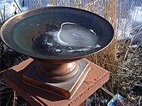 soaking birdbath