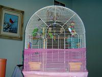 dirty bird cage
