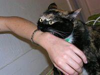 cat biting a wrist
