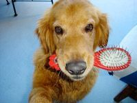 dog with brush in mouth