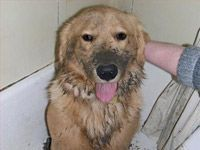 happy wet dog in tub