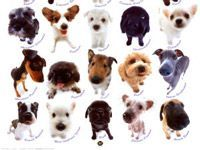 picture of a lot of dog breeds