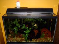a clean aquarium
