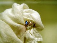 drying gold ring