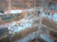 mold on brick walls