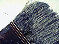 closeup of paintbrush hairs