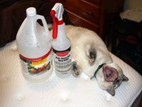 cleaning supplies next to a cat