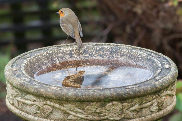 A bird sits on the edge of a dirty birdbath.