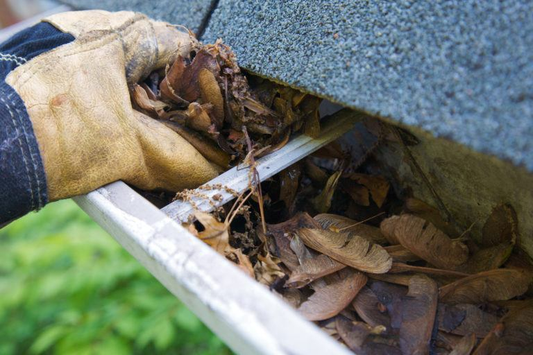 A gloved hand removes leaves from a gutter.
