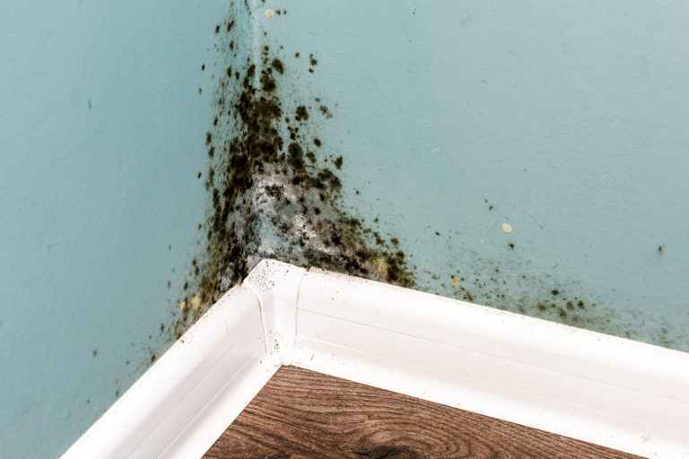 Mold growing in the corner of an interior room.